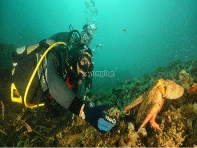 explorando los fondos marinos