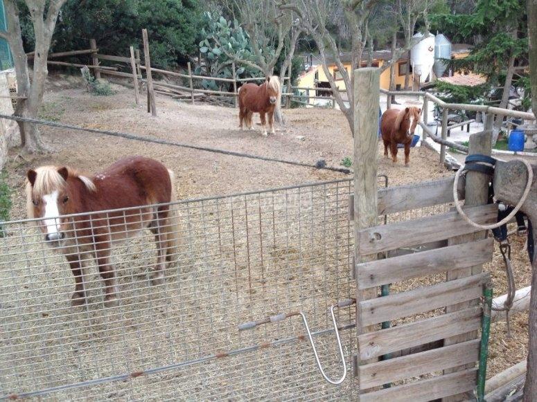 I nostri bellissimi pony
