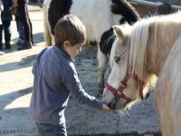 给小马喂食