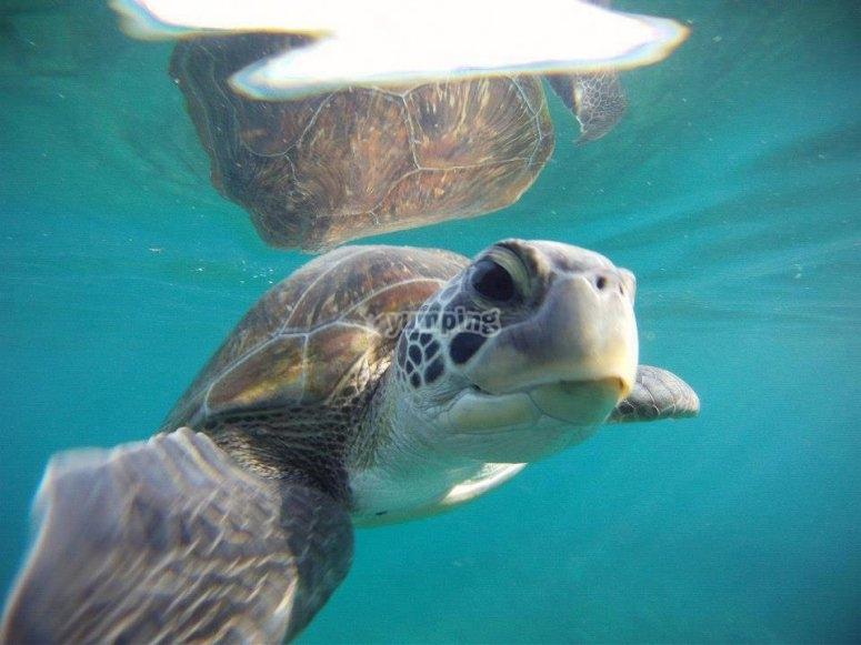 乌龟在水里