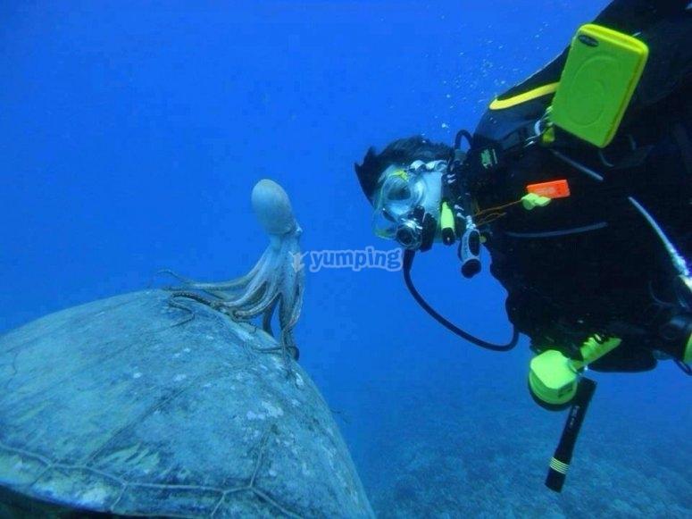 在乌龟上的章鱼