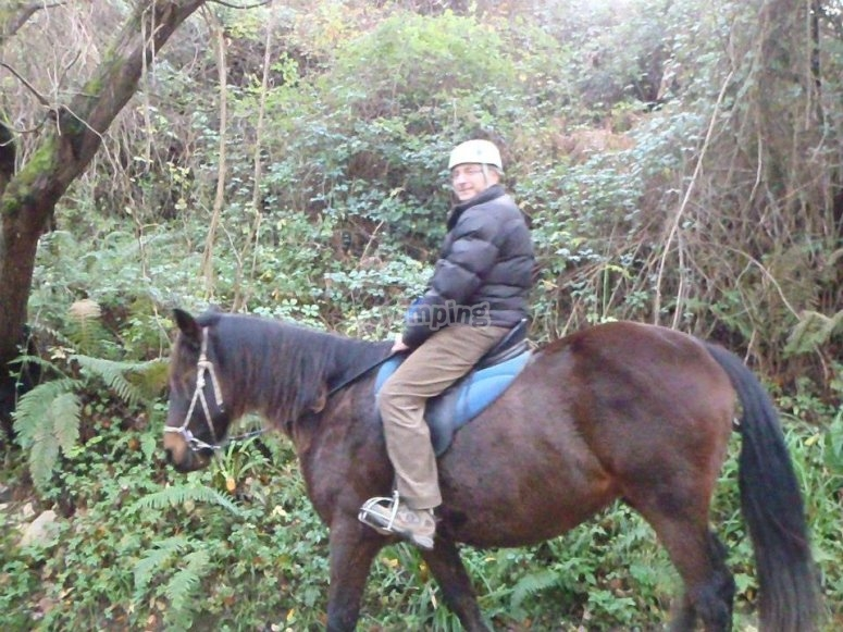 On the back of the horse among the vegetation