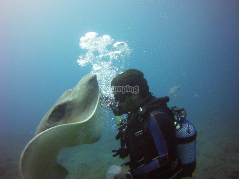 享受特内里费毯潜水潜水员跳水