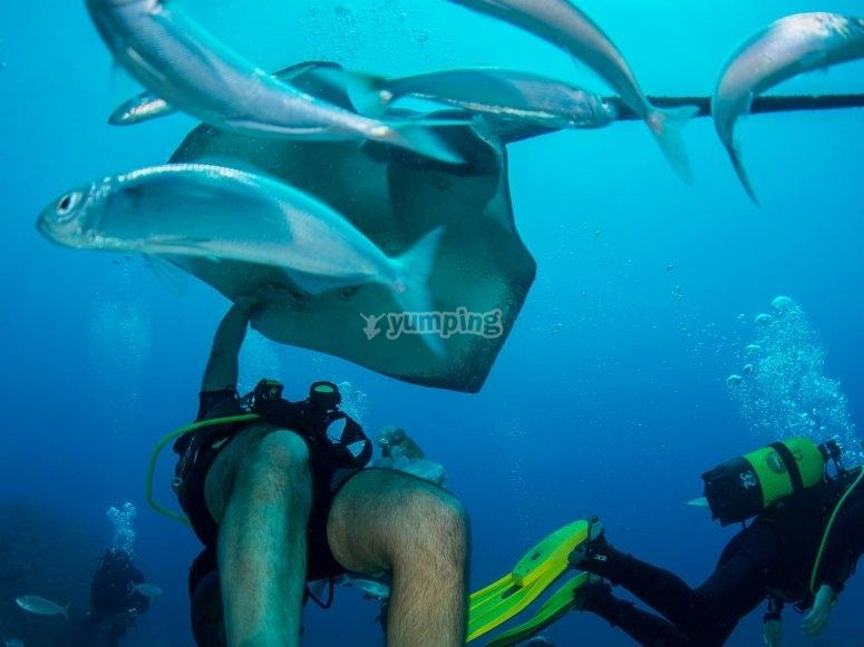 跳水跳水在特内里费毛毯水下摄像机