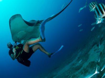 潜水在拉斯加勒塔斯特内里费岛潜水