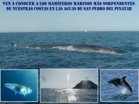 海洋哺乳动物