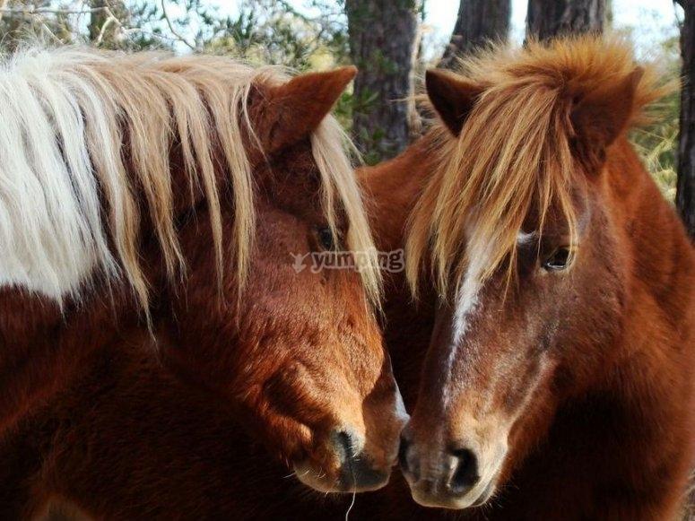 Pony ride Murcia