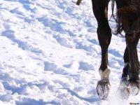Paseo a caballo por la nieve en La Cerdanya 1 hora