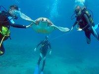 Buceando entre tortugas en Tenerife