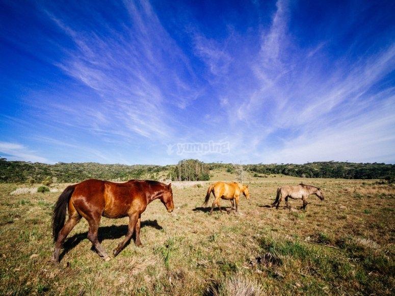 Granada a caballo