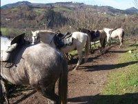 Excursión a caballo por Granada, 2 horas