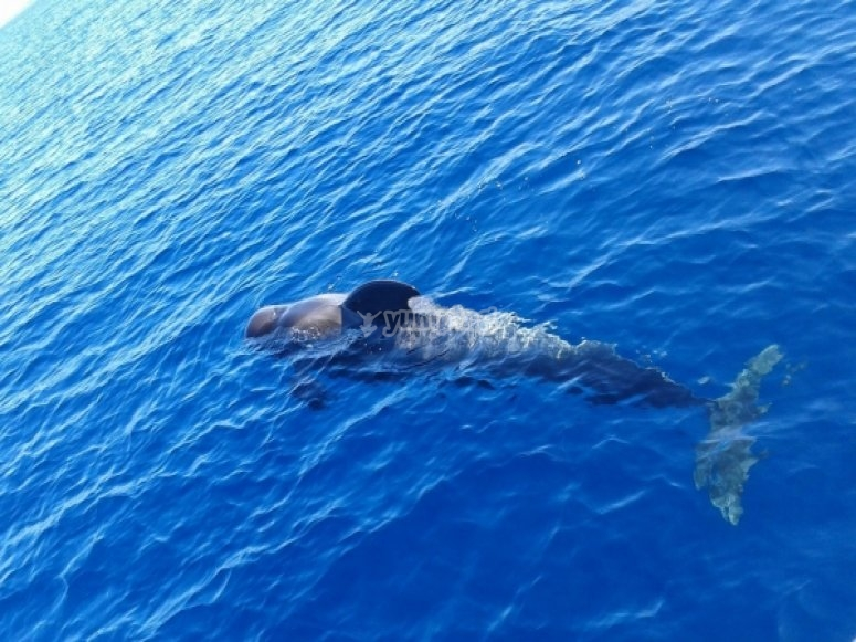 seeing dolphins