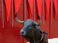 galeria del toro
