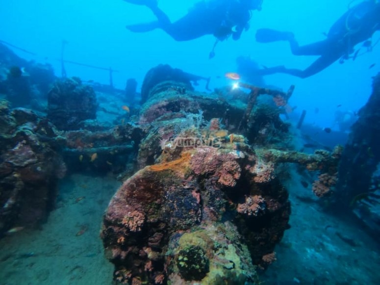 Inmersión de buceo en mar abierto