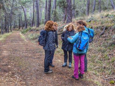 在 Hayedo de Montejo 徒步一日
