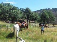 Cavalli nelle nostre strutture
