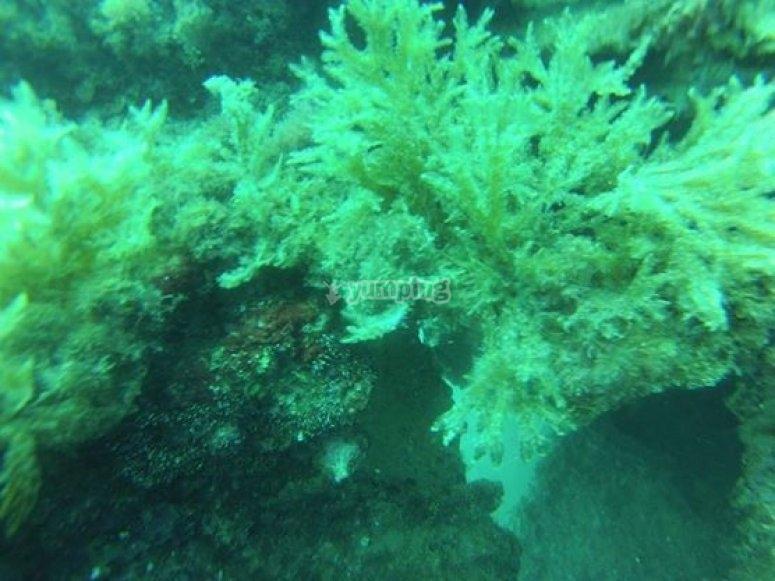 fondo marino de torrevieja