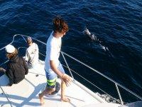 Paseo en barco en Arona