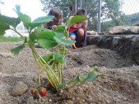 cultivando en el huerto