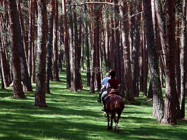 Recorre los bosques a caballo