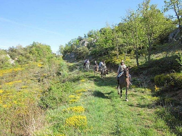 Ruta a caballo en el campo de Santander