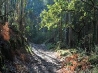 A path in nature