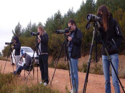 Avistamiento de lobo ibérico en Sierra Culebra