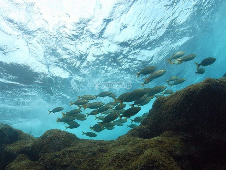peces buceo en javea