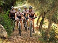 在马洛卡骑自行车的人群