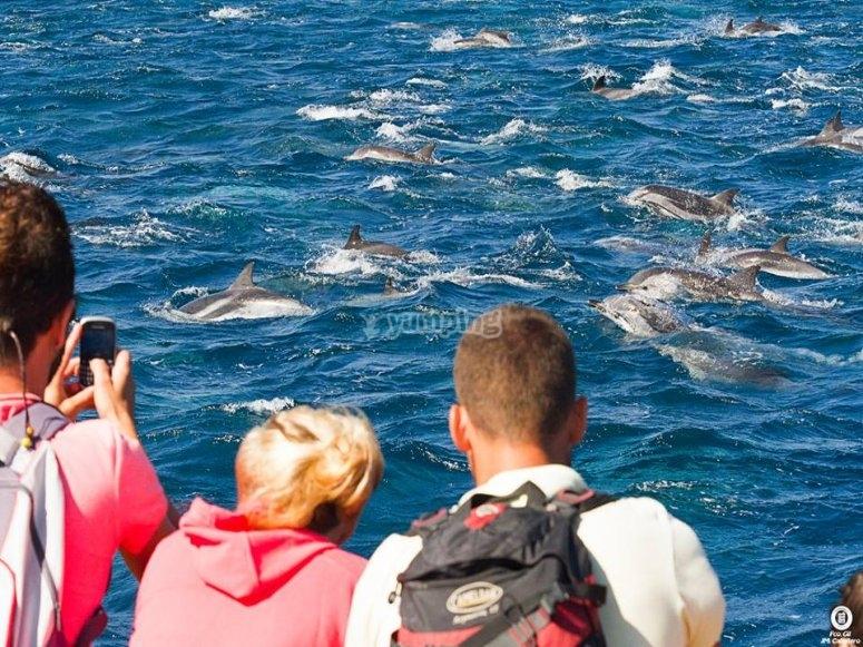 Osservare i cetacei