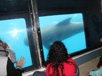 Avistamiento de cetáceos en Tarifa niños Temp baja