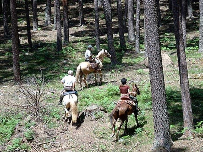 Recorriendo los bosques a caballo