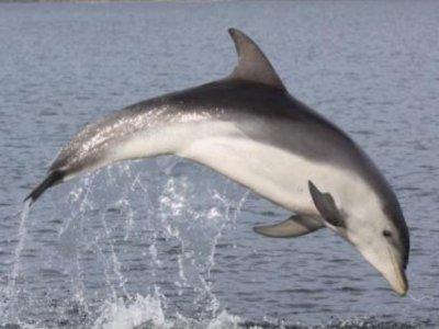 Travesias en Veleros Avistamiento de Cetáceos