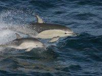 delfin con su cria
