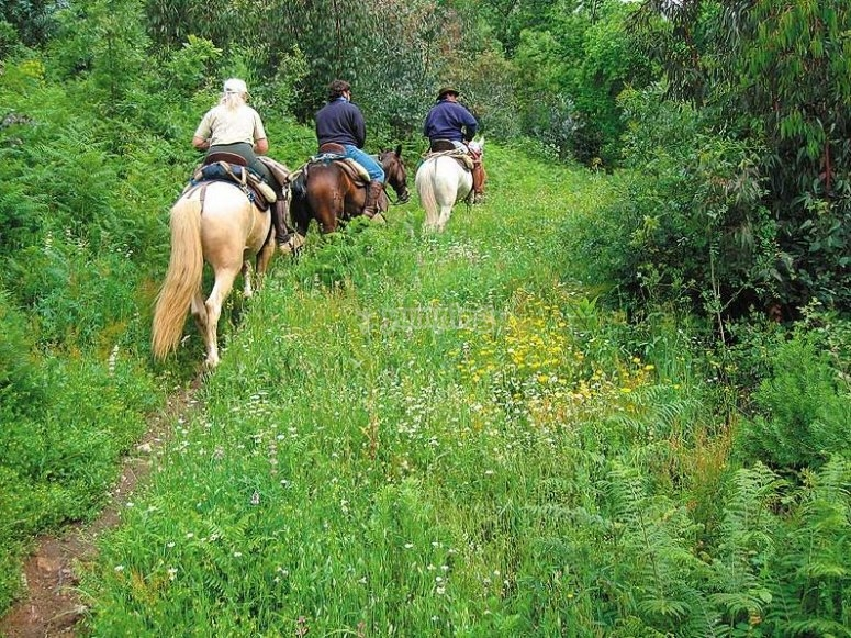 Recorre la Sierra de Gredos a caballo