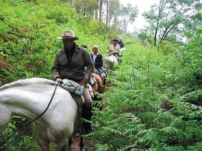 Rodeados de naturaleza a caballo