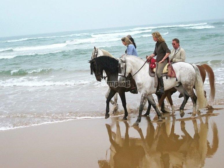 沿着海滩骑马
