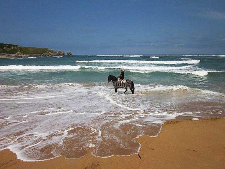 观看马匹的波浪