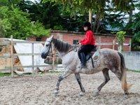 Learning on horseback