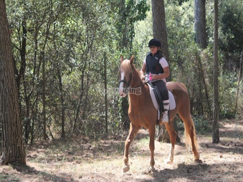 Horse riding in the countryside