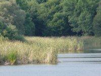 Vegetation growing in the water
