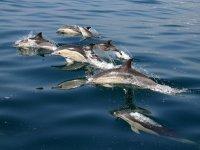 Avvistamenti di delfini