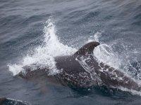 标志Aquatime帆船与海豚海豚