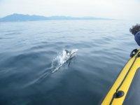海豚关闭马贝拉海岸