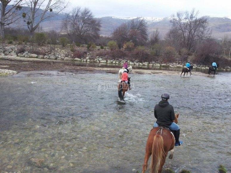 Caballos cruzan rio