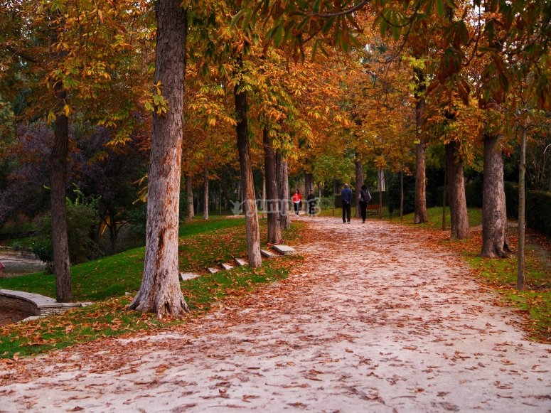 Tour along the paths of the Retiro Park