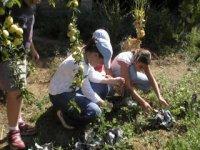 labores de granja