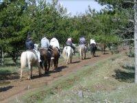 Camino entre los arboles a caballo