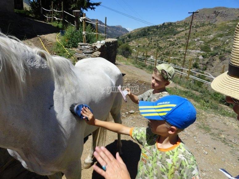 Brushing the horsse