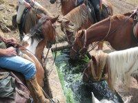 Cavalli nelle Asturie